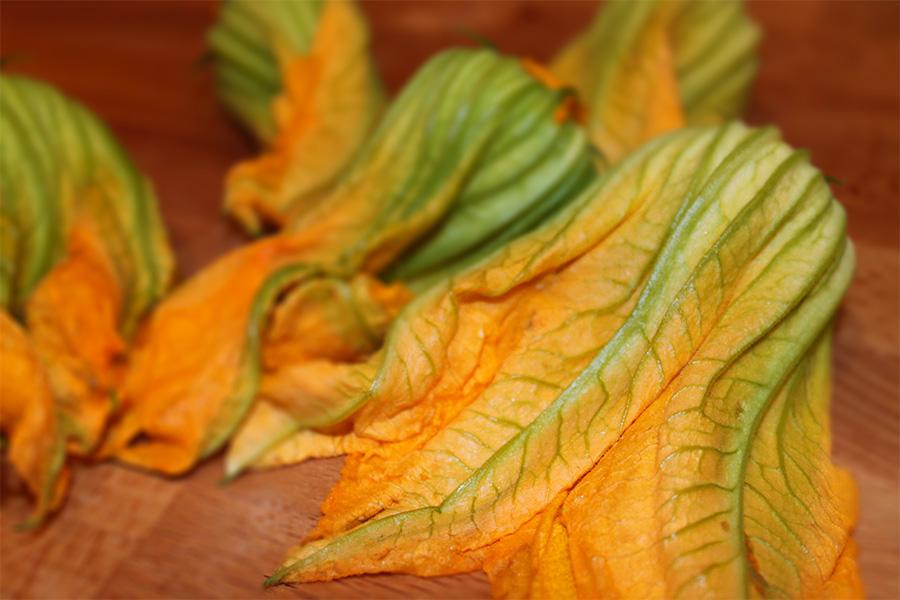 il fiore della zucchina romanesca