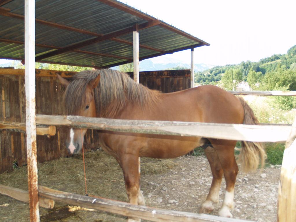 cavallo borbona