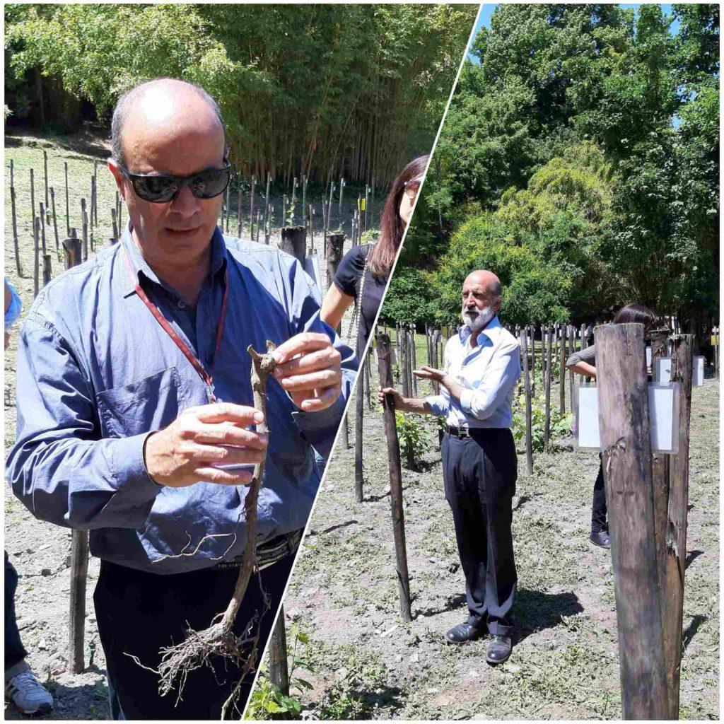 orto_botanico_vinicio_maroni