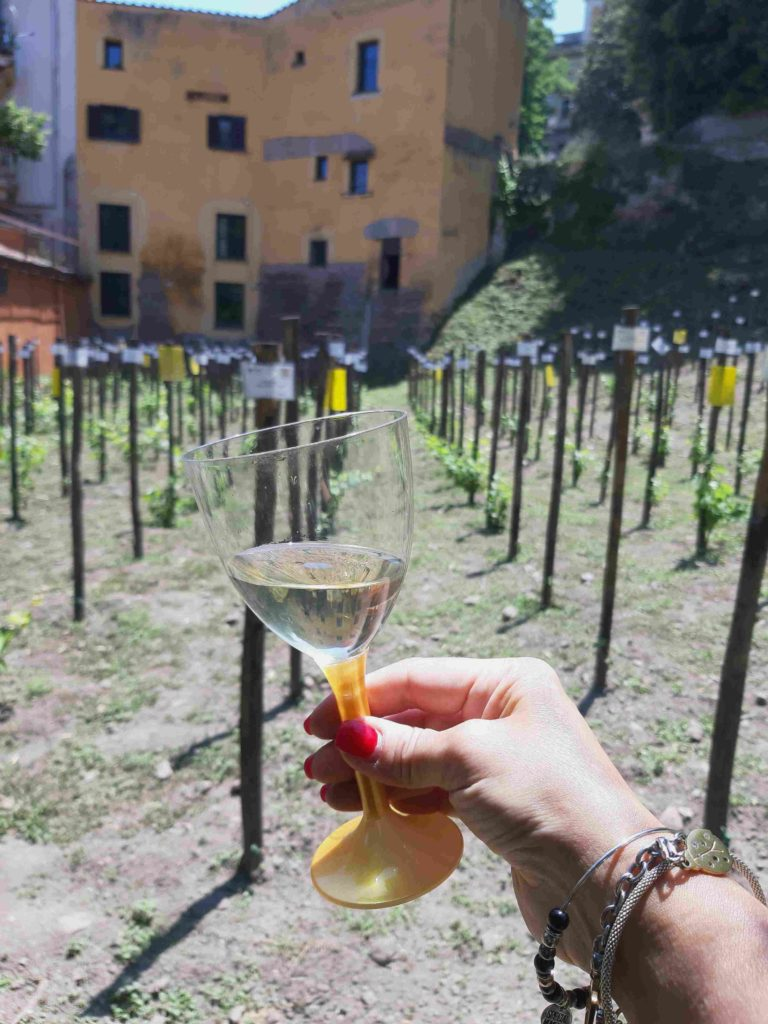 orto_botanico_vino-moscato